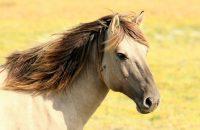 Speciális terápia gyógypedagógiai lovaglás