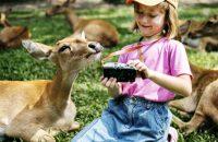 Kirándulást szervezünk a Pécsi Állatkertbe