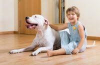 A kutyás terápia hatása a gyermekek mozgás- és képességfejlődésére – Workshop