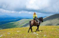 Speciális terápia – lovas terápia